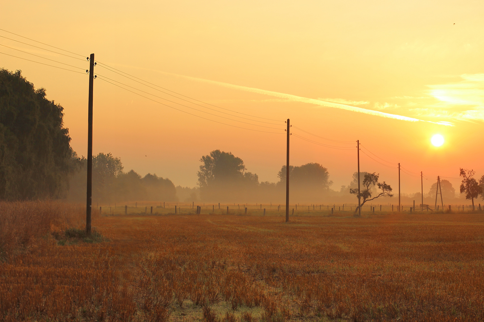 Morgenfrüh auf der Wiese