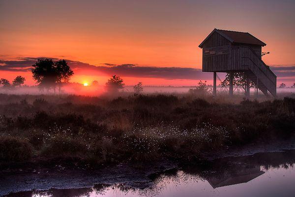 Morgenglühen im Moor