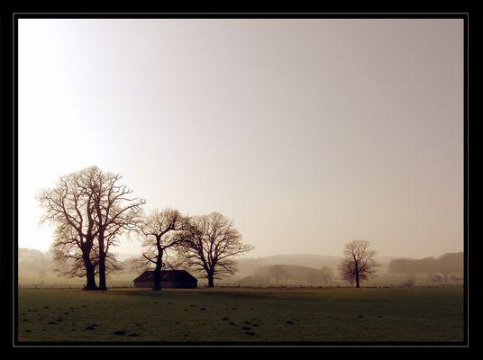 Morgenlicht #1 -- morning light