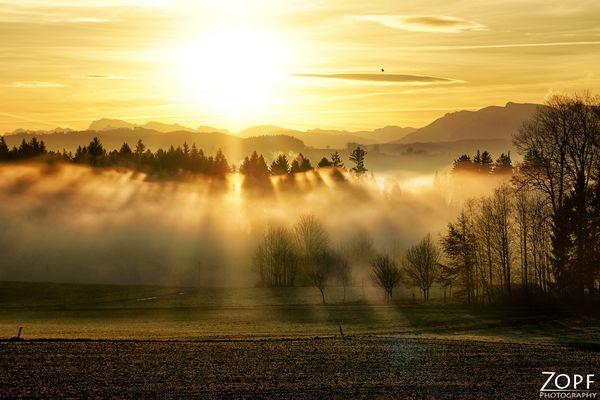 Morgenlicht .