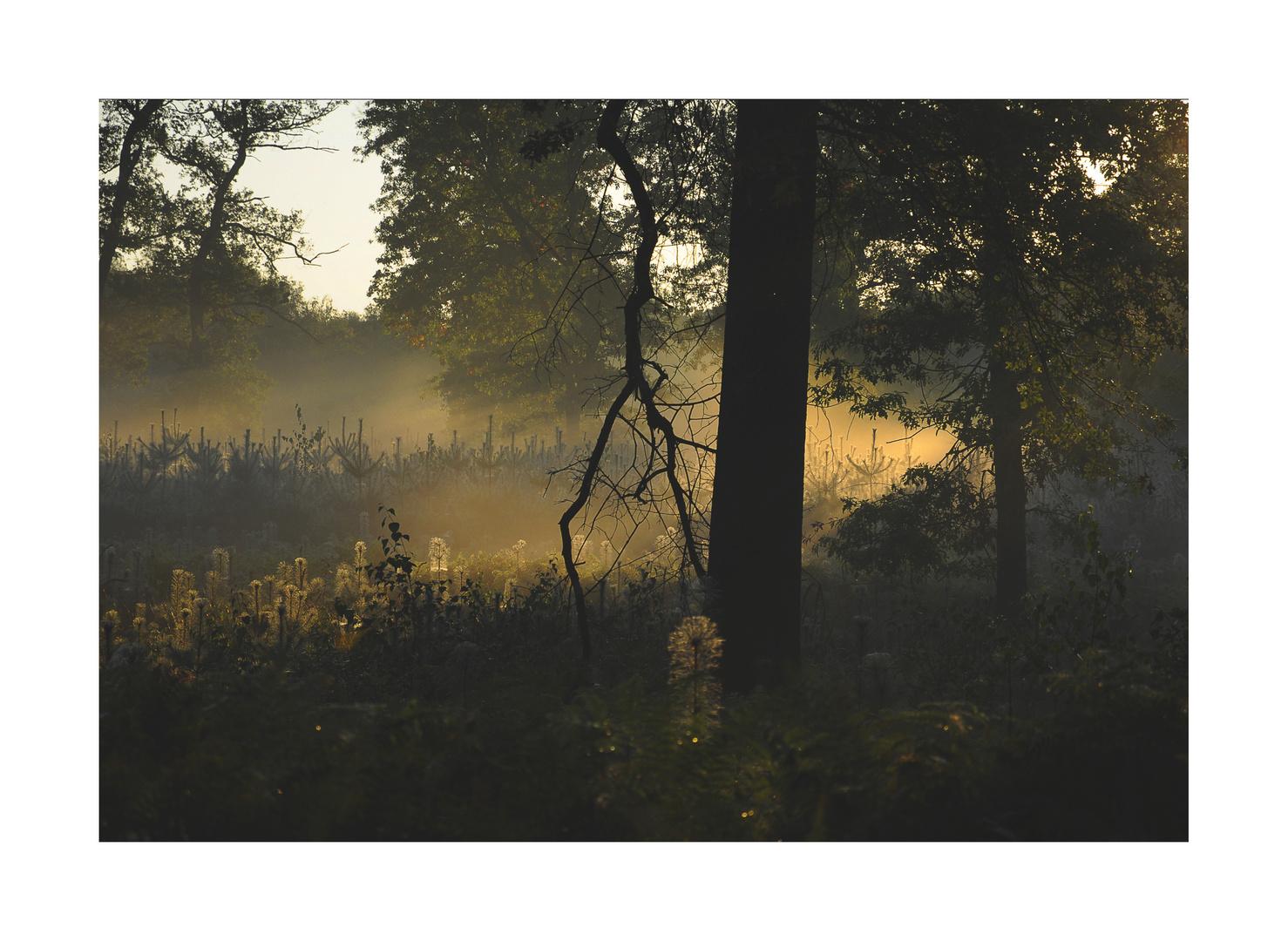Morgenlicht......