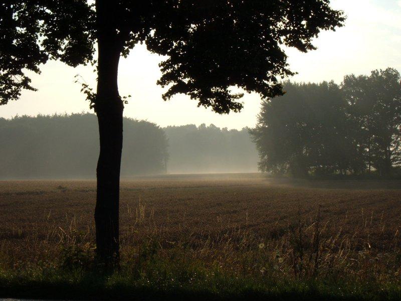 Morgennebel..