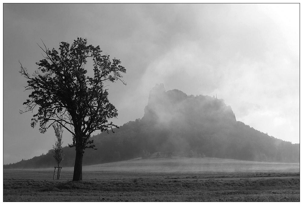 Morgennebel am Lilienstein