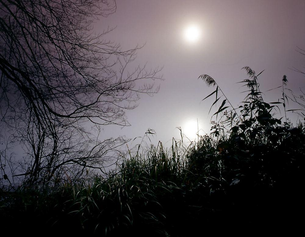Morgennebel am Schmalsee