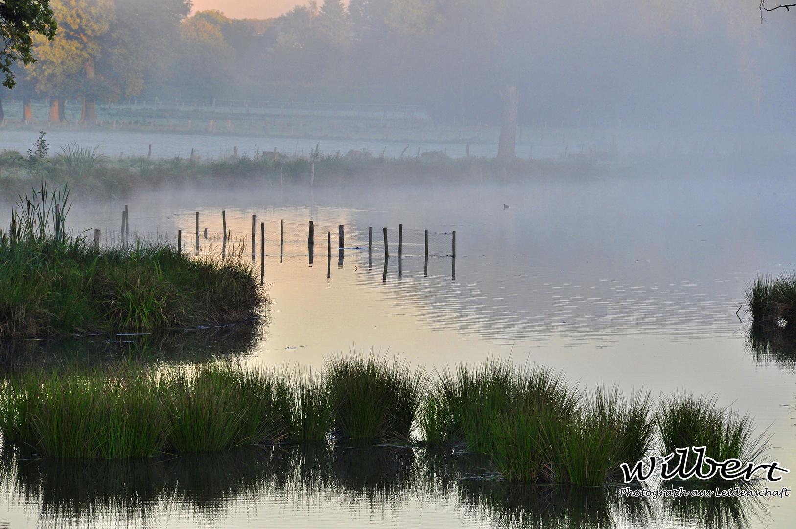 Morgennebel an der Nette
