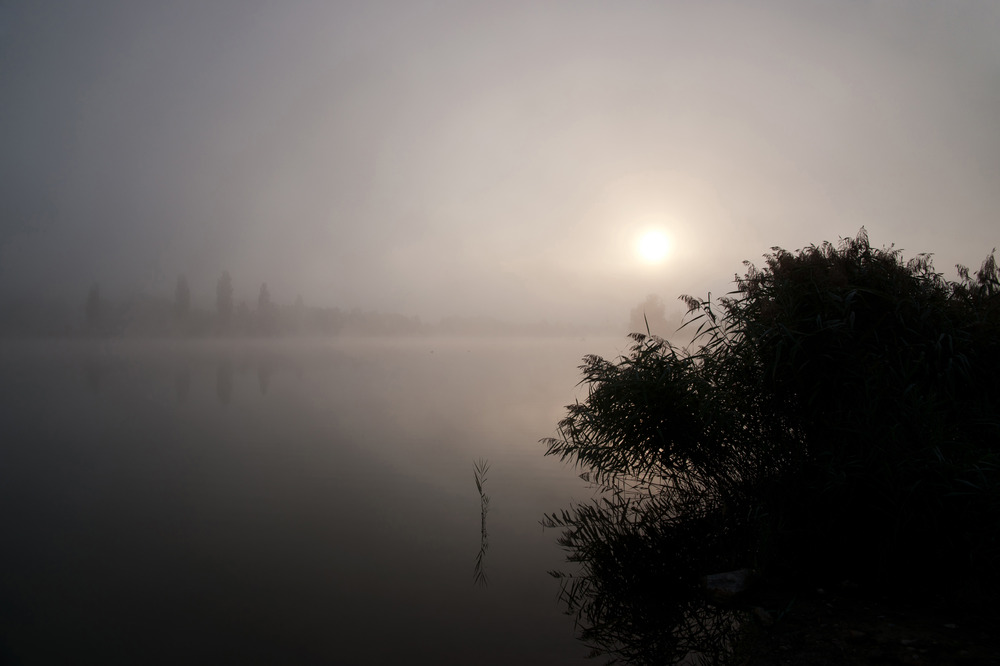 Morgennebel