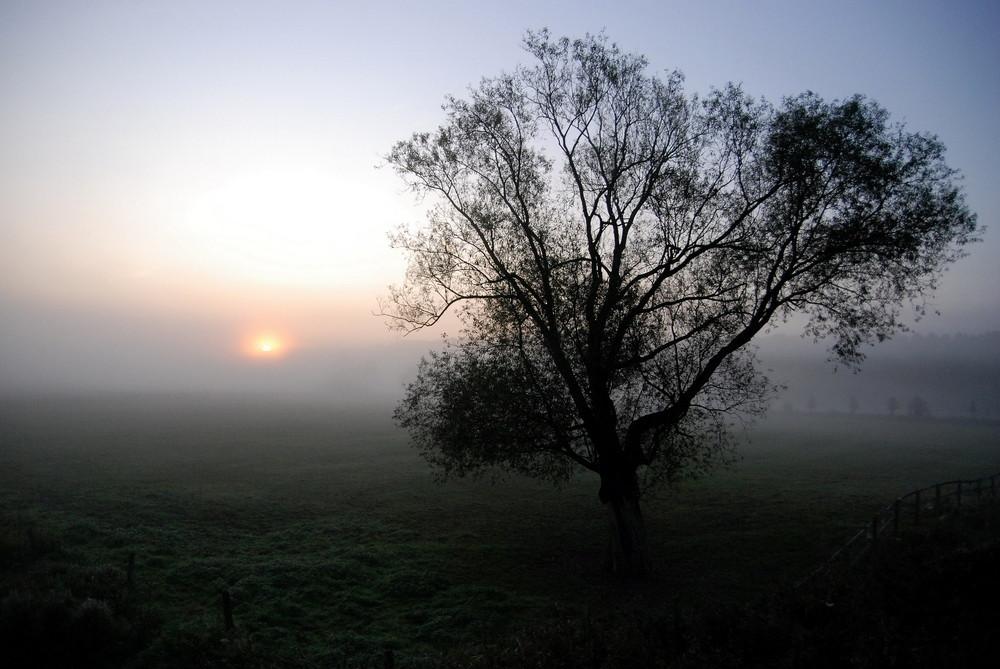 Morgennebel...