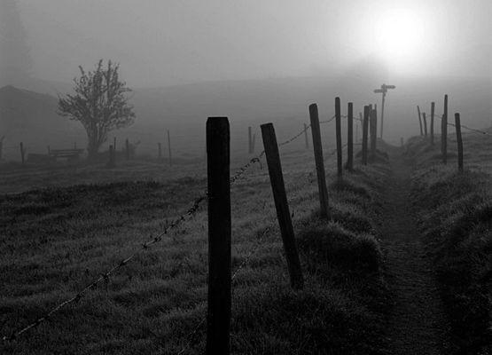 Morgennebel im Allgäu