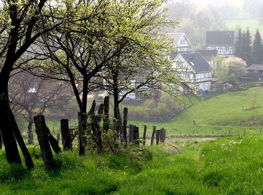 Morgennebel im Bergischen Land