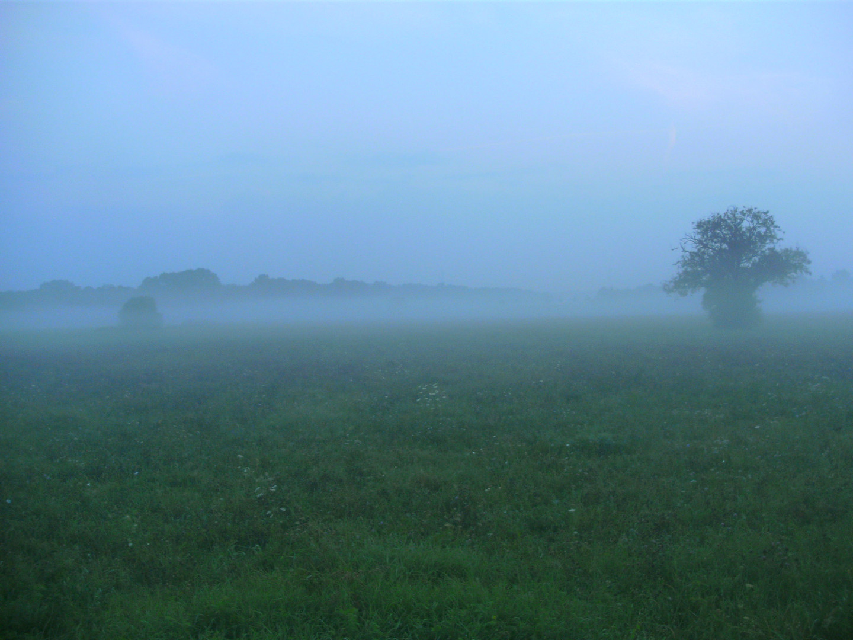Morgennebel im Frühherbst 3