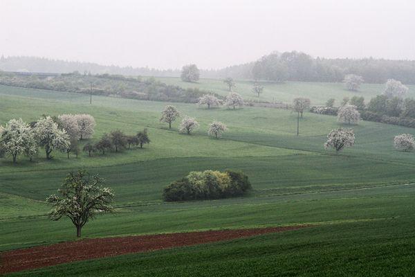 Morgennebel im Frühling