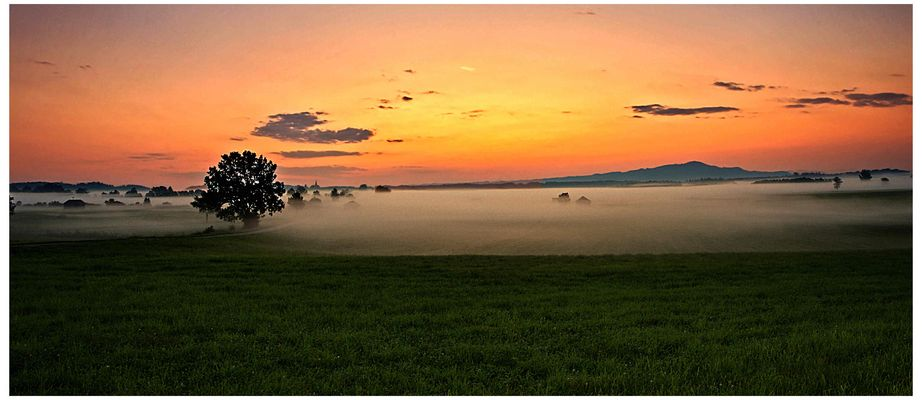 Morgennebel im Haarmoos
