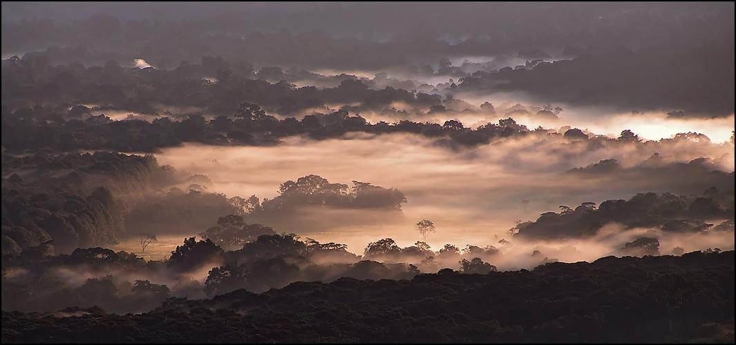 Morgennebel im Kakamega (reload)