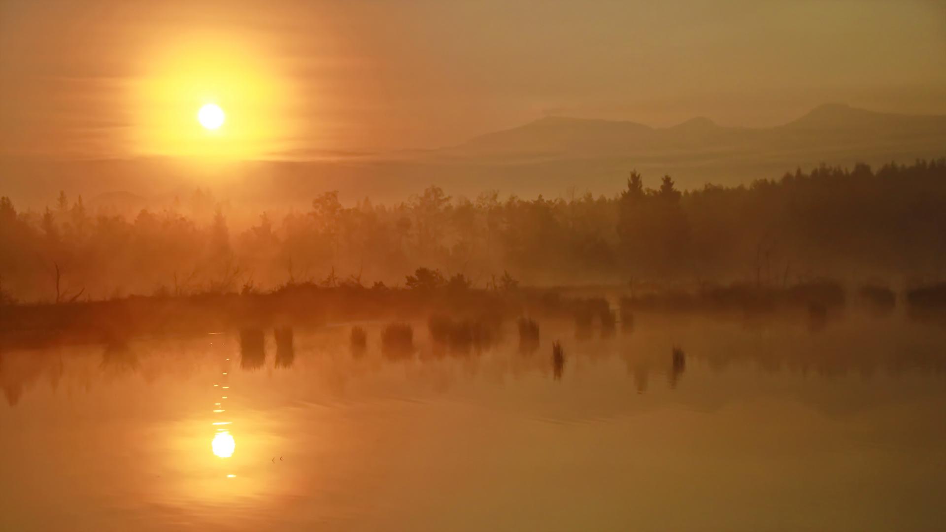 Morgennebel im Moor