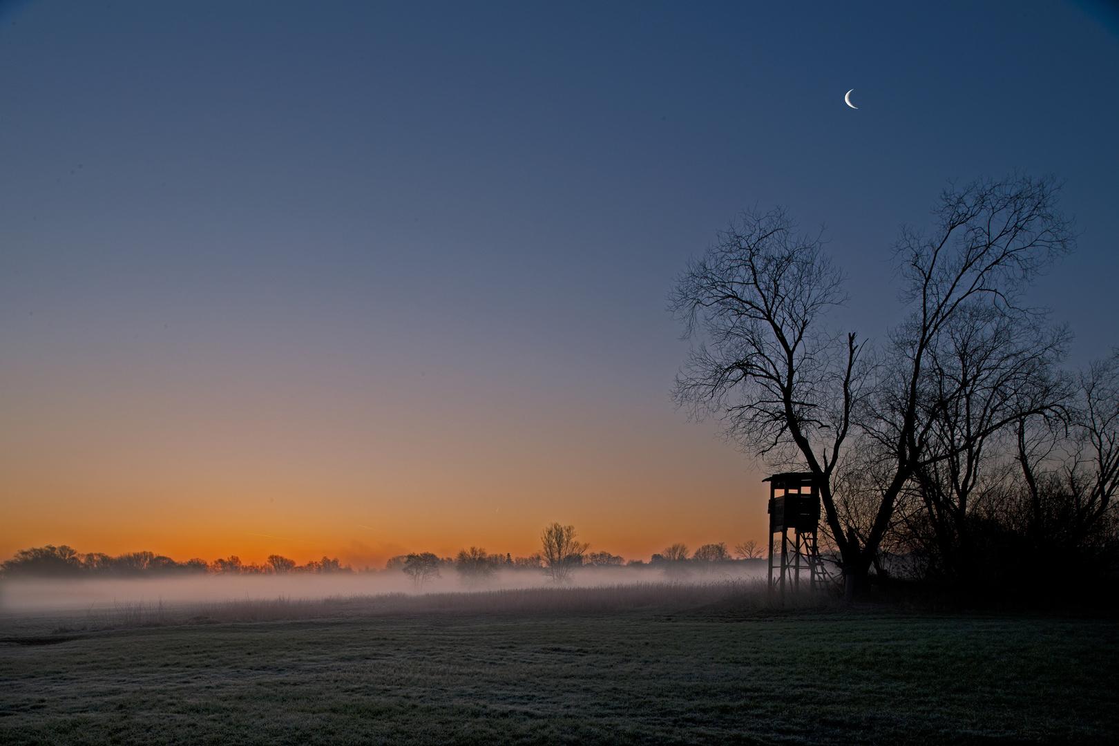 Morgennebel im Moorgebiet