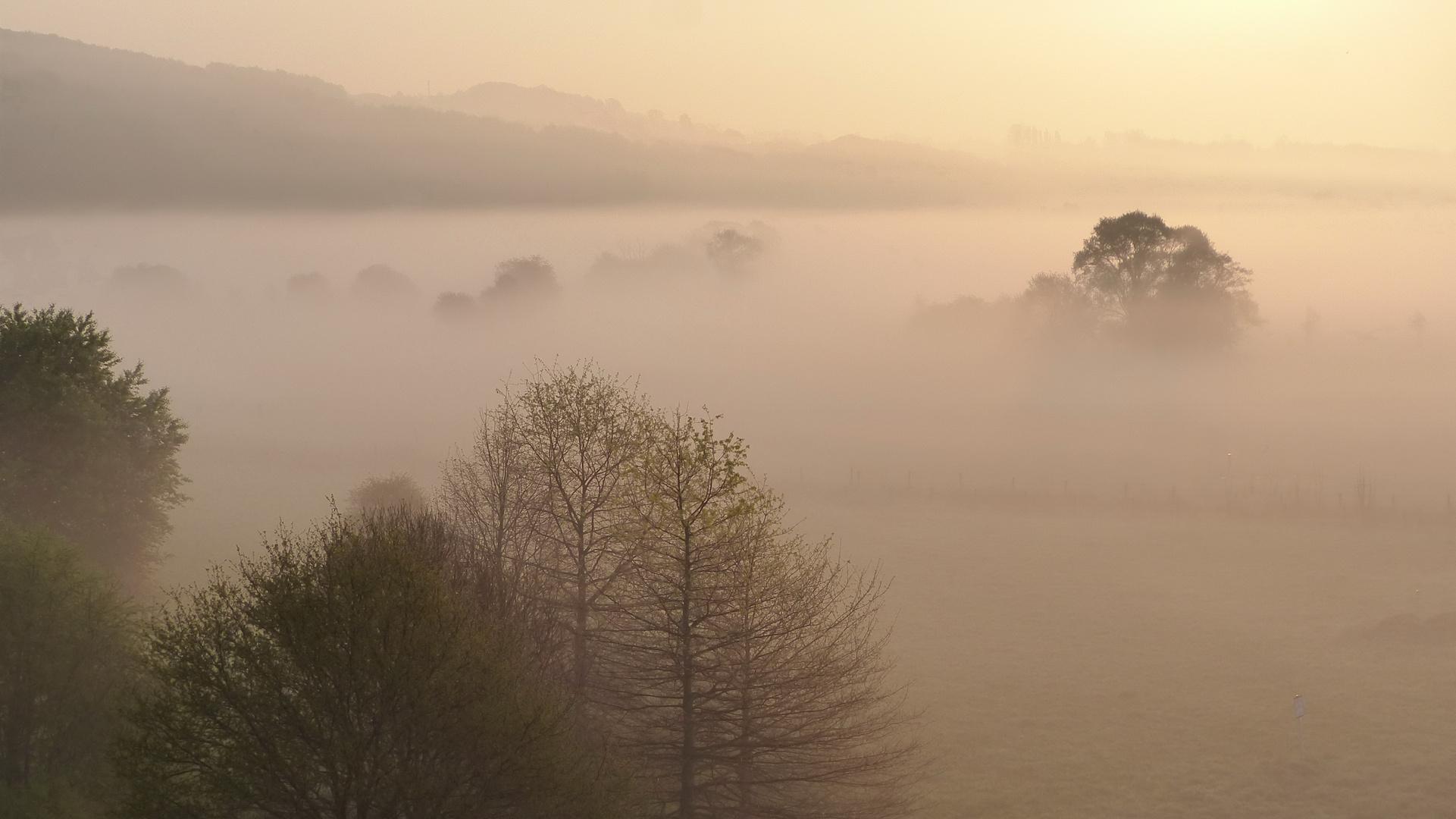 Morgennebel im Ruhrtal