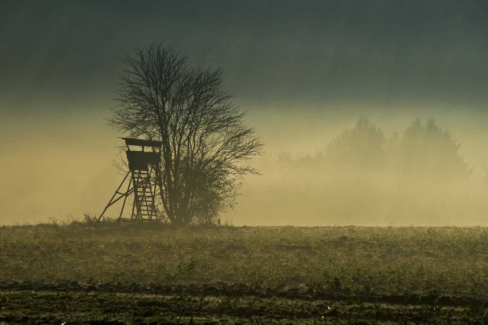 Morgennebel im Sauerland 2