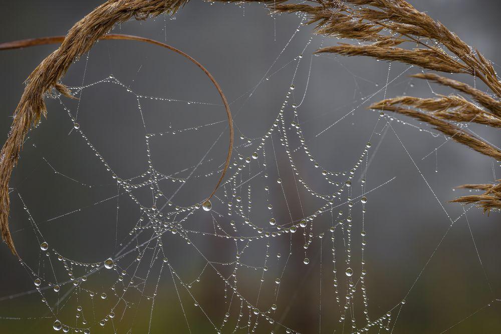 Morgennebel im Spinnennetz © Matthias Buehner