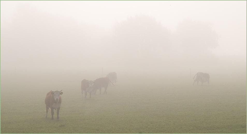 Morgennebel in Blekinge