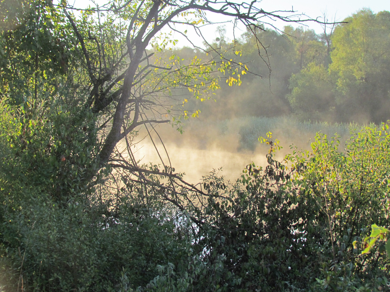 Morgennebel in der Haiminger Au