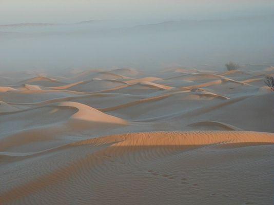 Morgennebel in der Sahara