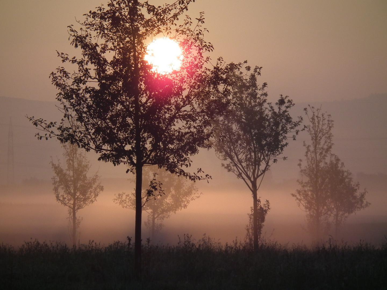 Morgennebel in der Streuobstwiese