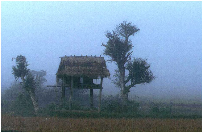 Morgennebel in Laos
