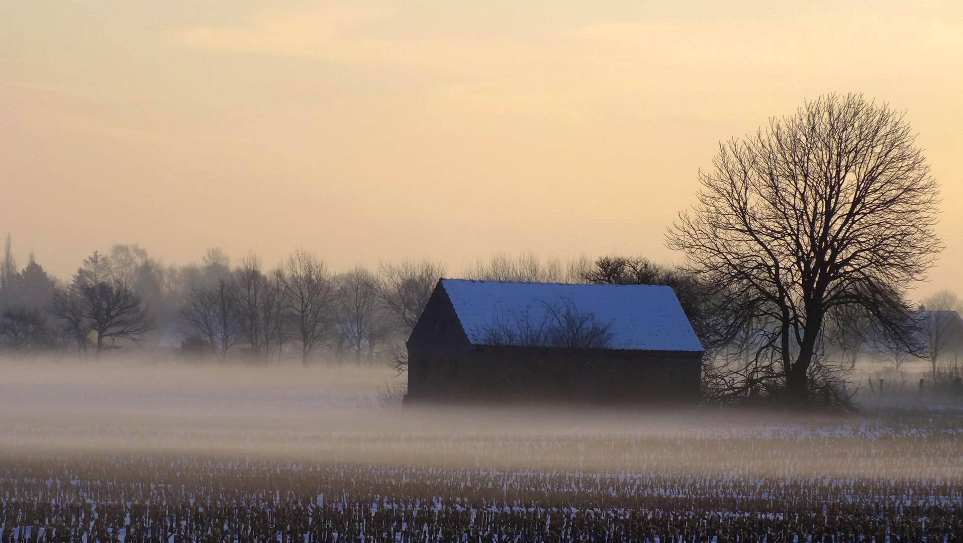 Morgennebel liegt über der Wiese