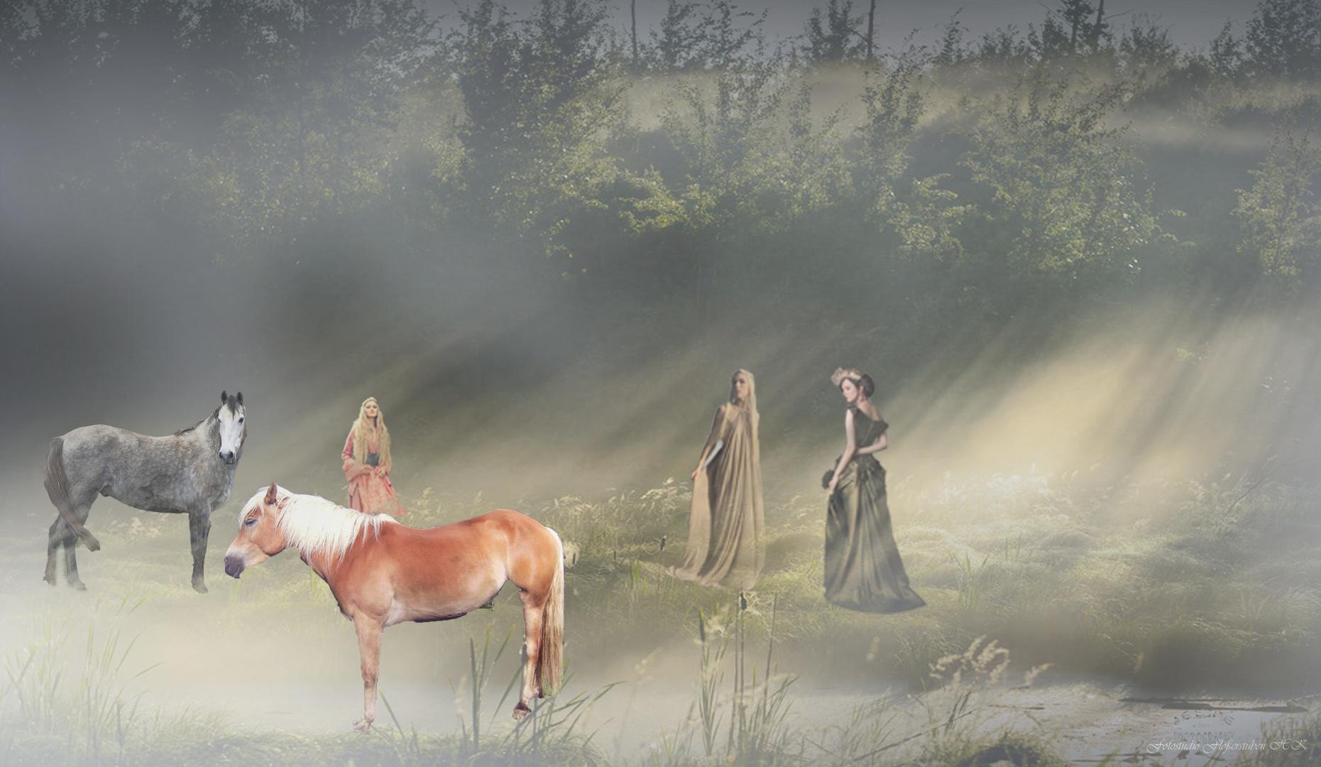Morgennebel mit Pferde