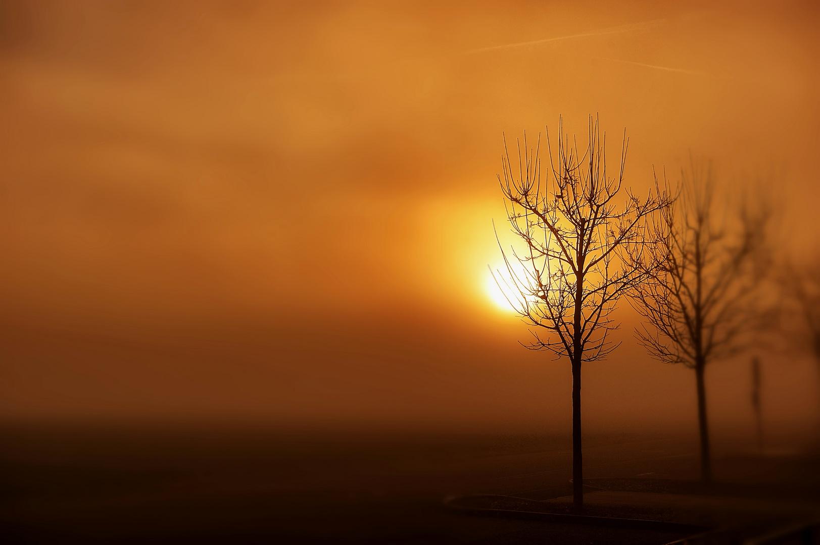 Morgennebel mit Sonne