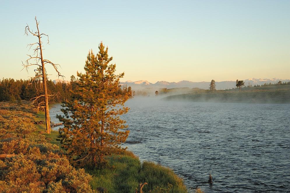 Morgennebel über dem Madison River