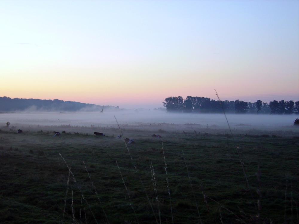Morgennebel über dem Störtal