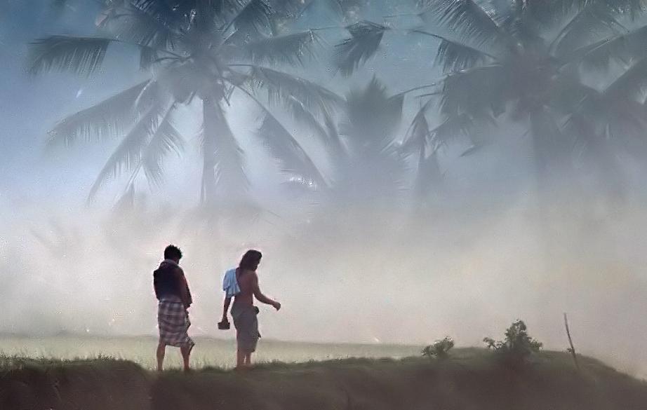 * Morgennebel über den Reisfeldern.. * (Scan)