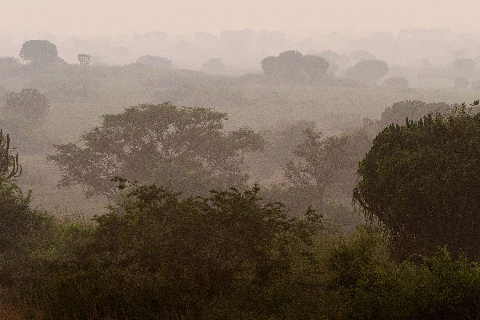 Morgennebel über der Savanne