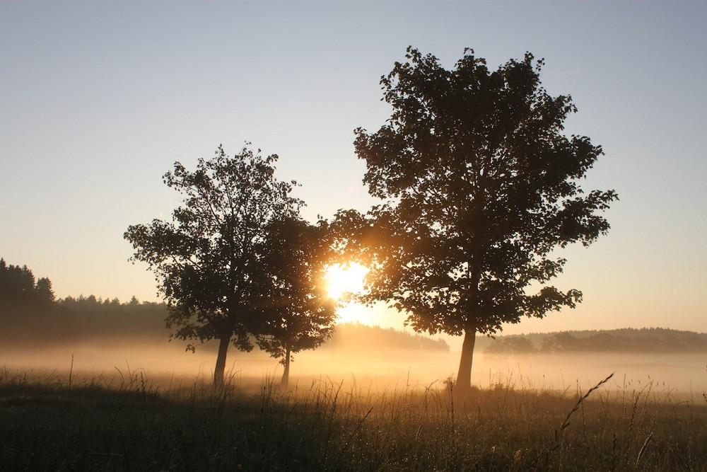 Morgennebel_2