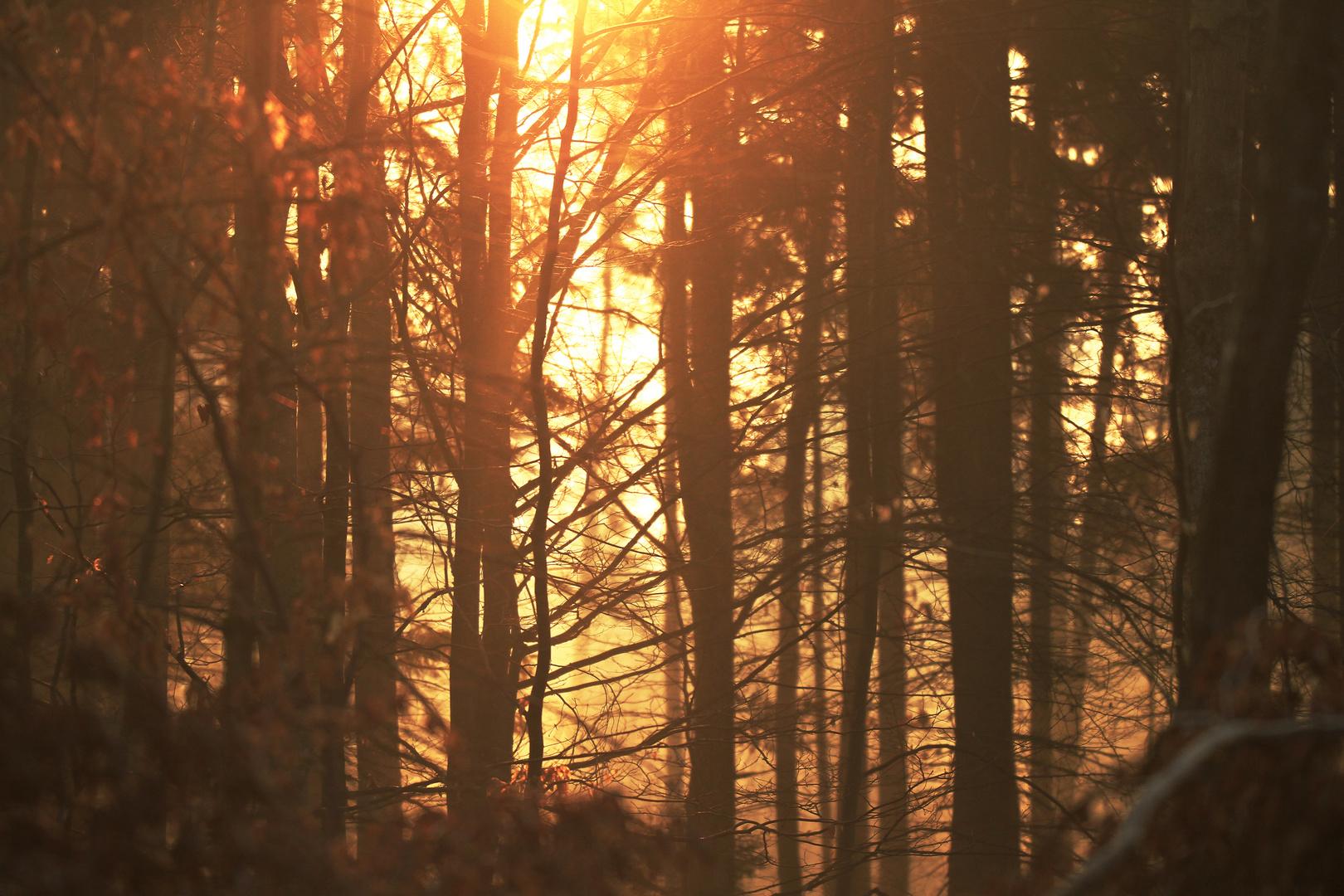 Morgenröte im Wald