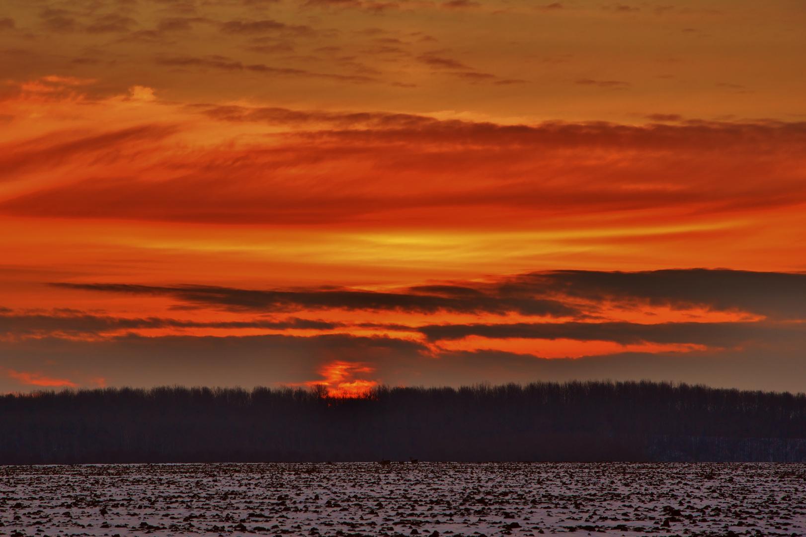 Morgenrot auf dem Marienfeld