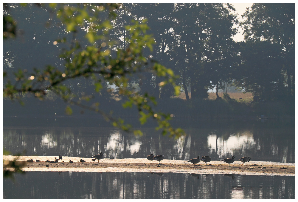 Morgenruhe am See