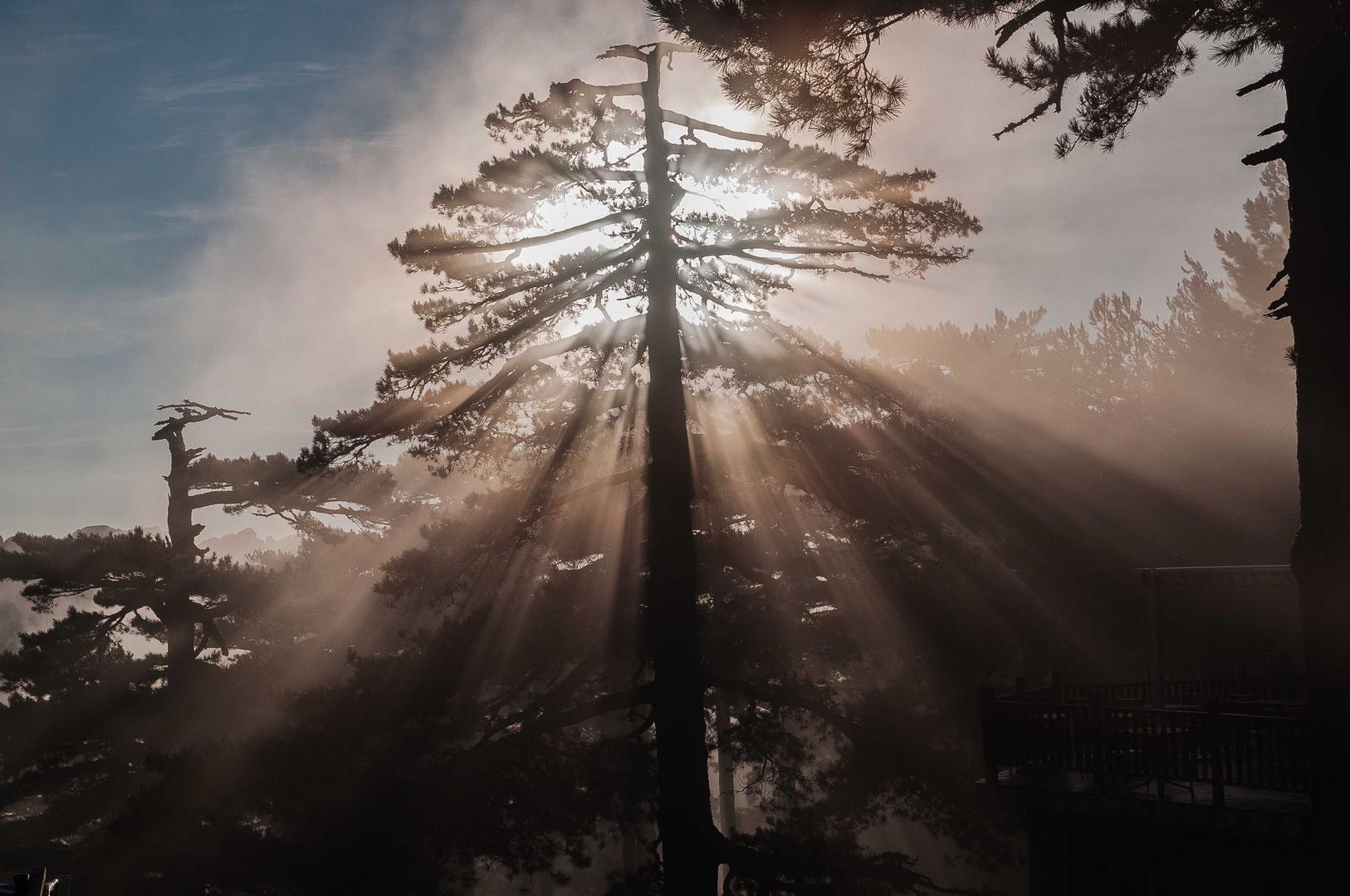 Morgens am Col de Bavella 3