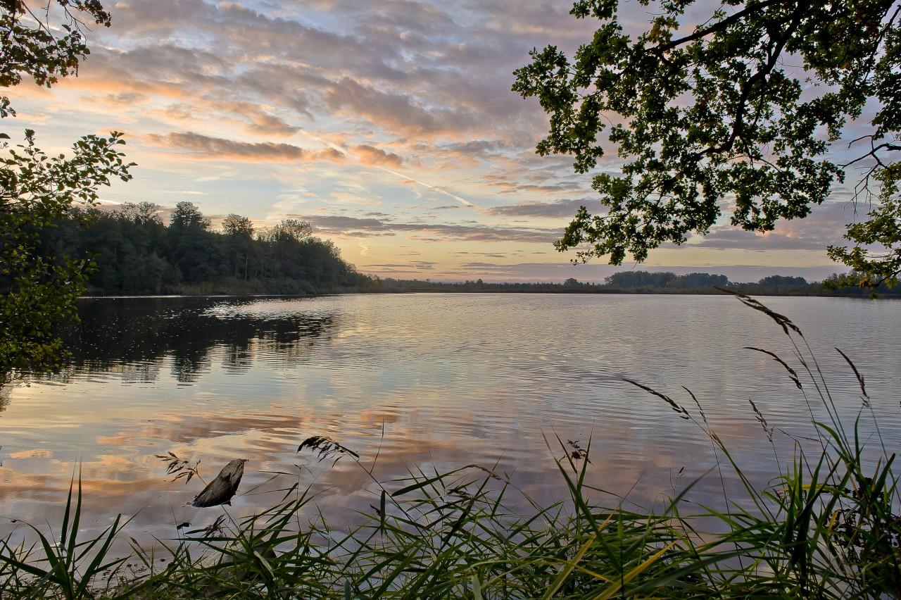 Morgens am Häcklerweiher