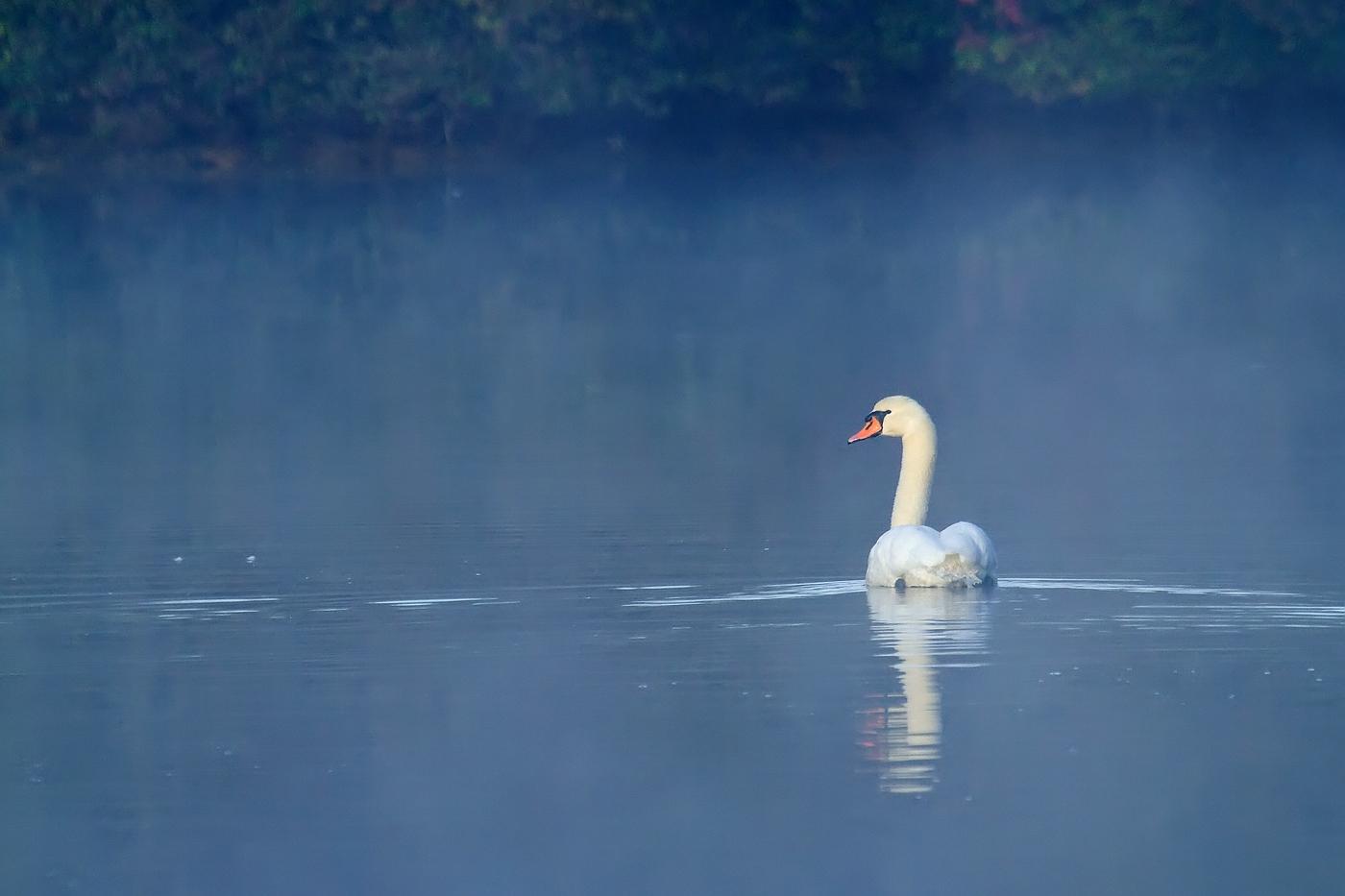 Morgens am Heimatsee