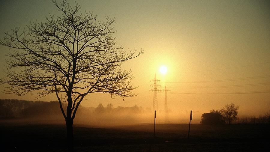 Morgens am Main