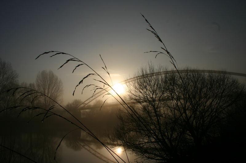 Morgens am Mainufer