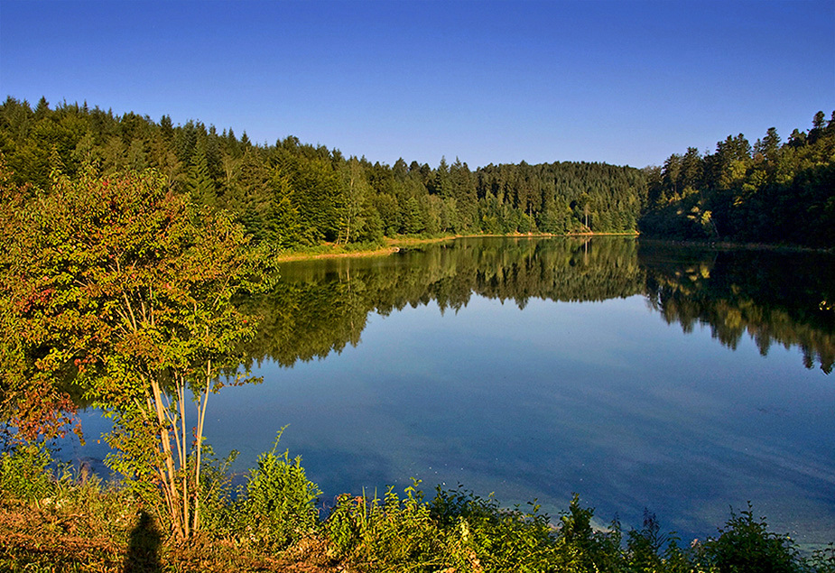 morgens am Stausee