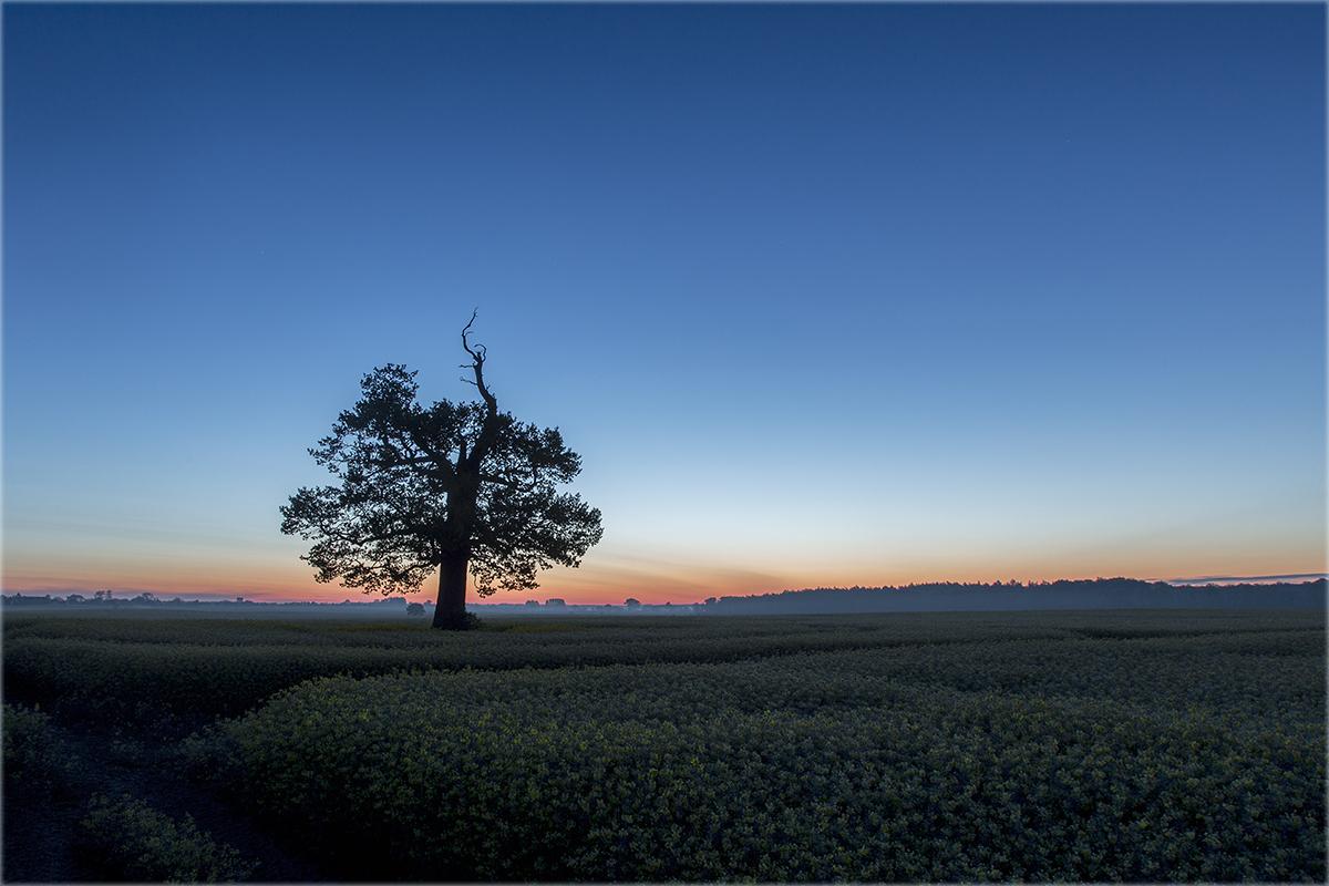 Morgens bei der alten Eiche...