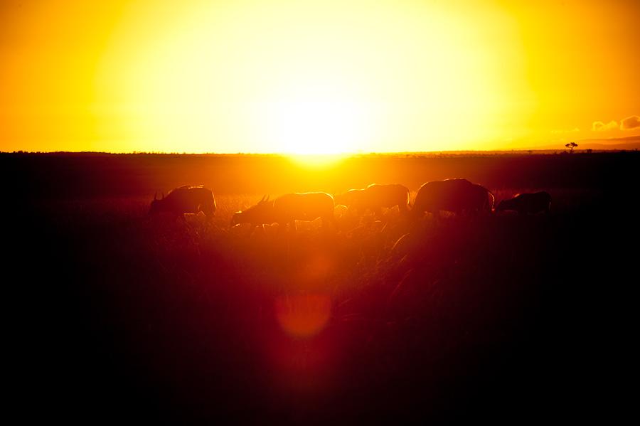 Morgens halb 7 in der Masai Mara