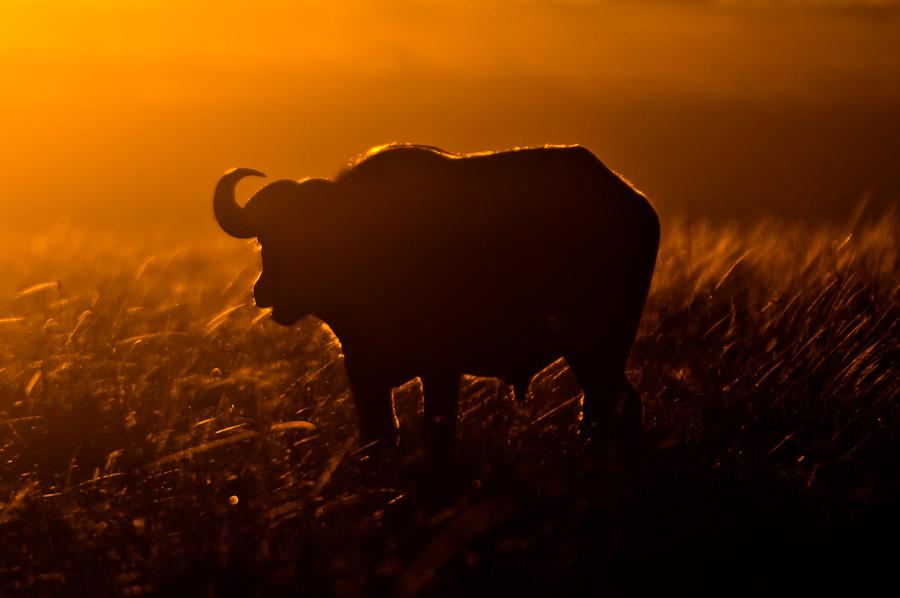 Morgens halb 7 in der Masai Mara II