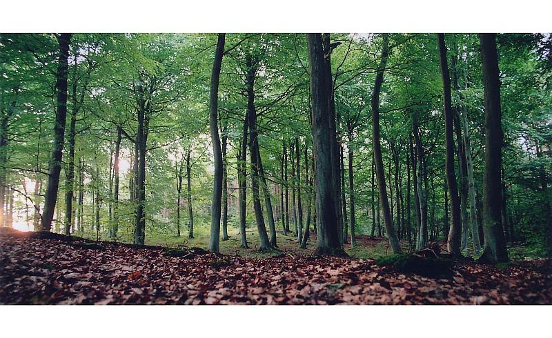 morgens im buchenwald
