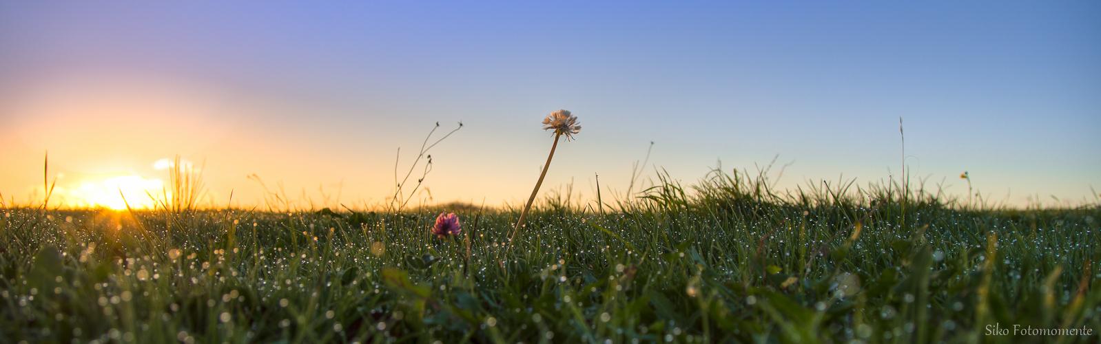... morgens im Gras ...