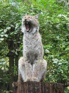 Morgens im Heidelberger Zoo.......